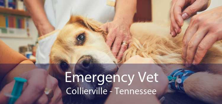 Emergency Vet Collierville - Tennessee