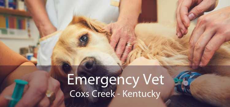 Emergency Vet Coxs Creek - Kentucky