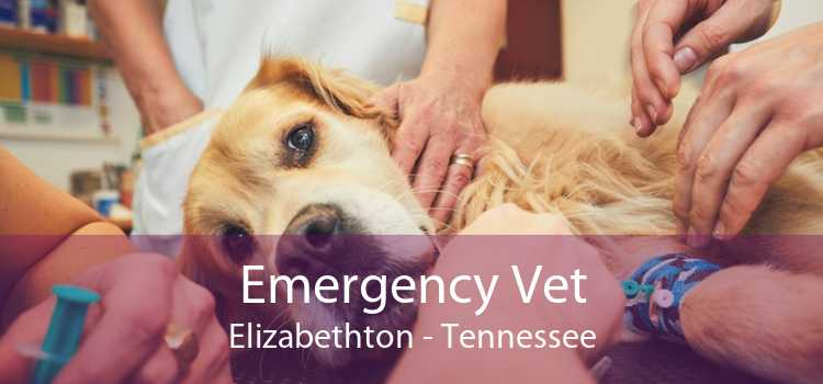 Emergency Vet Elizabethton - Tennessee