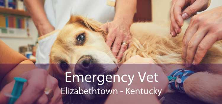 Emergency Vet Elizabethtown - Kentucky