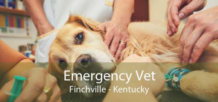 Emergency Vet Finchville - Kentucky
