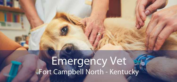 Emergency Vet Fort Campbell North - Kentucky