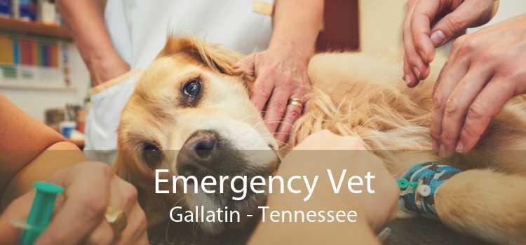 Emergency Vet Gallatin - Tennessee