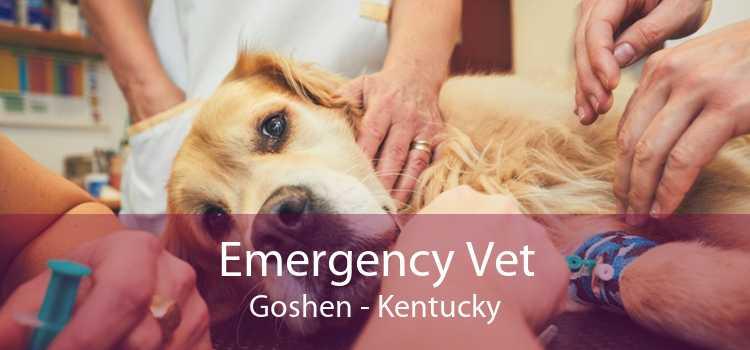 Emergency Vet Goshen - Kentucky