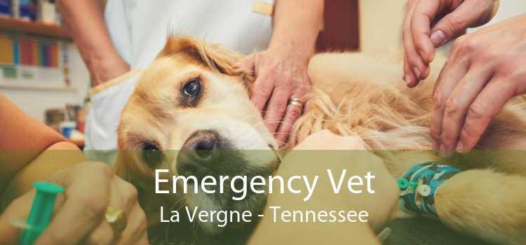 Emergency Vet La Vergne - Tennessee