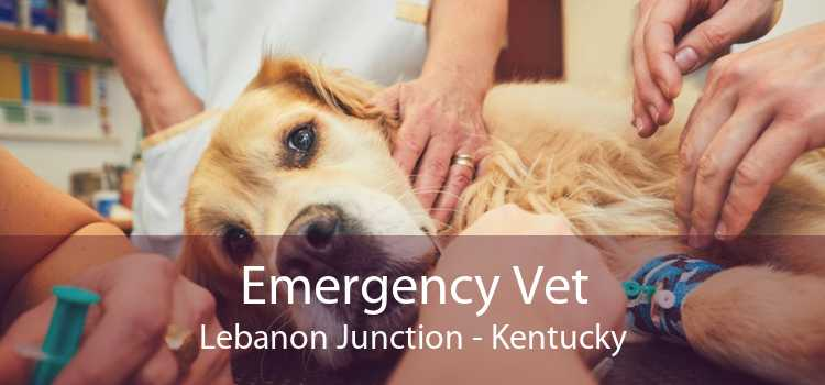 Emergency Vet Lebanon Junction - Kentucky