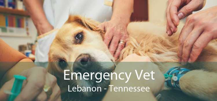 Emergency Vet Lebanon - Tennessee