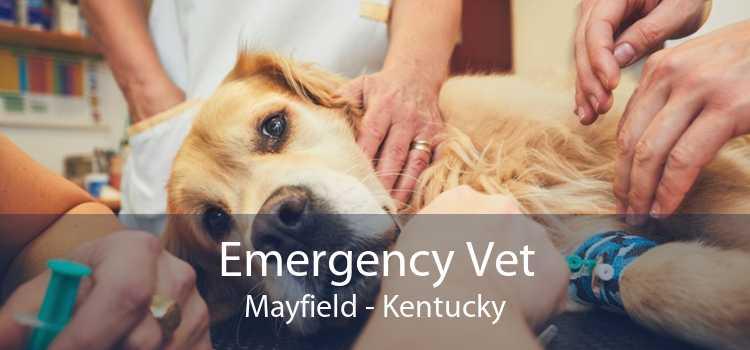 Emergency Vet Mayfield - Kentucky