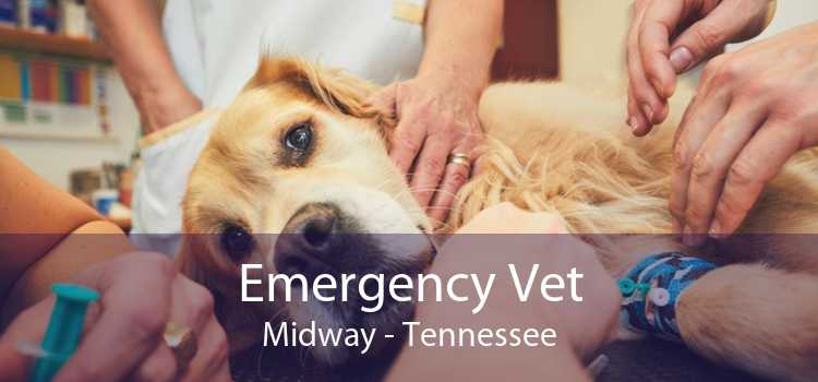 Emergency Vet Midway - Tennessee