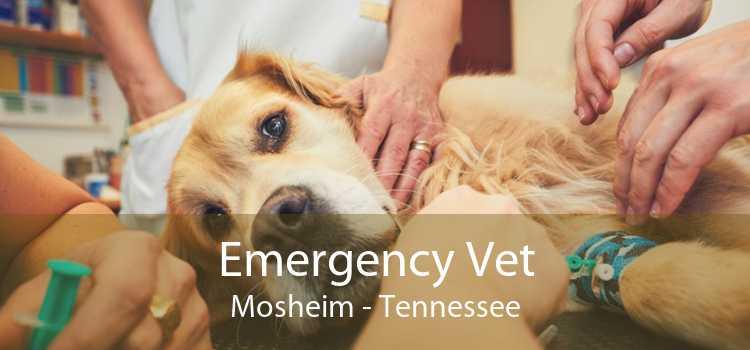 Emergency Vet Mosheim - Tennessee