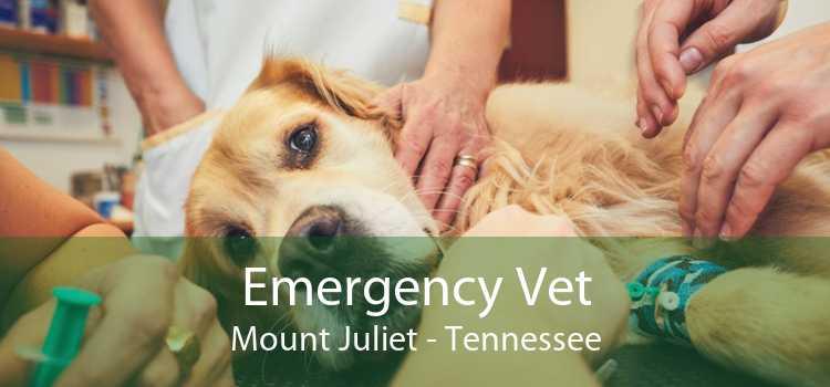 Emergency Vet Mount Juliet - Tennessee