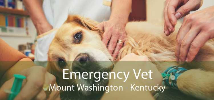 Emergency Vet Mount Washington - Kentucky