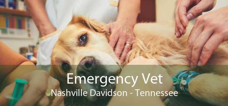 Emergency Vet Nashville Davidson - Tennessee