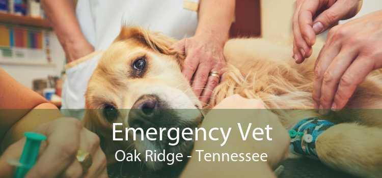 Emergency Vet Oak Ridge - Tennessee