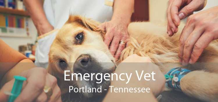 Emergency Vet Portland - Tennessee