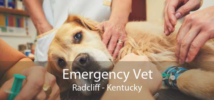 Emergency Vet Radcliff - Kentucky