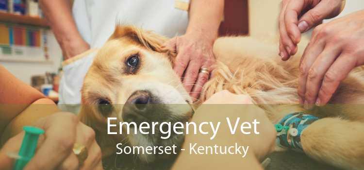 Emergency Vet Somerset - Kentucky