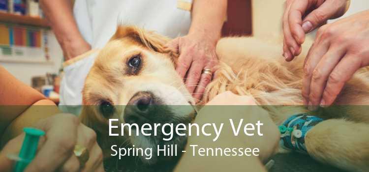 Emergency Vet Spring Hill - Tennessee