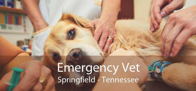 Emergency Vet Springfield - Tennessee