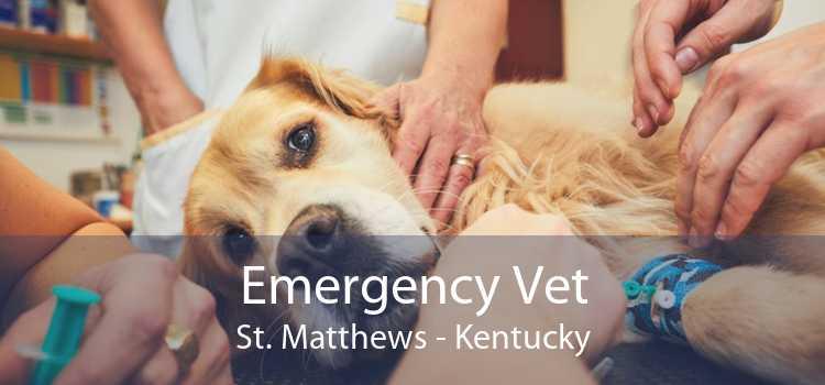 Emergency Vet St. Matthews - Kentucky