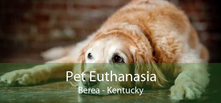 Pet Euthanasia Berea - Kentucky