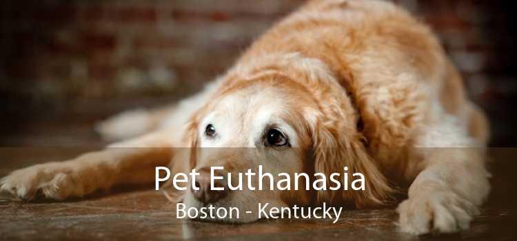 Pet Euthanasia Boston - Kentucky