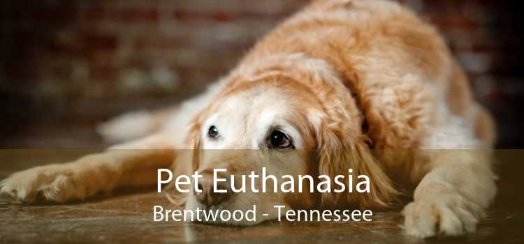 Pet Euthanasia Brentwood - Tennessee