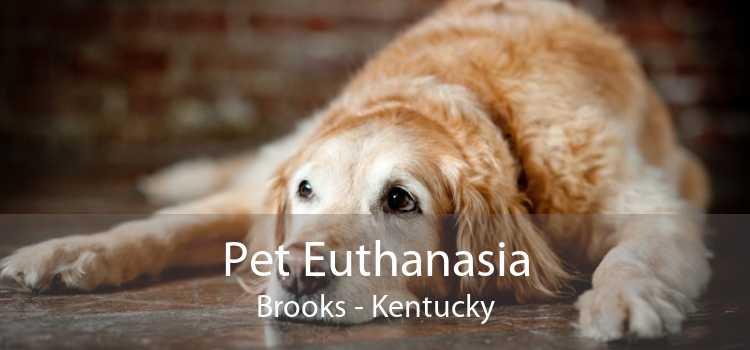 Pet Euthanasia Brooks - Kentucky