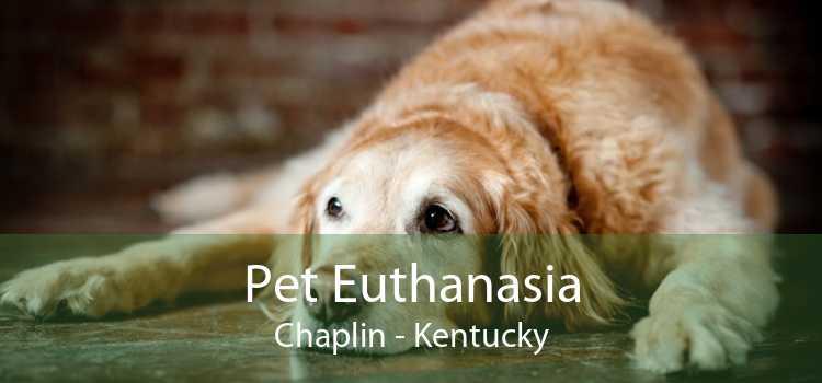 Pet Euthanasia Chaplin - Kentucky