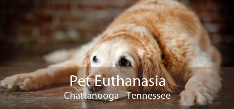 Pet Euthanasia Chattanooga - Tennessee