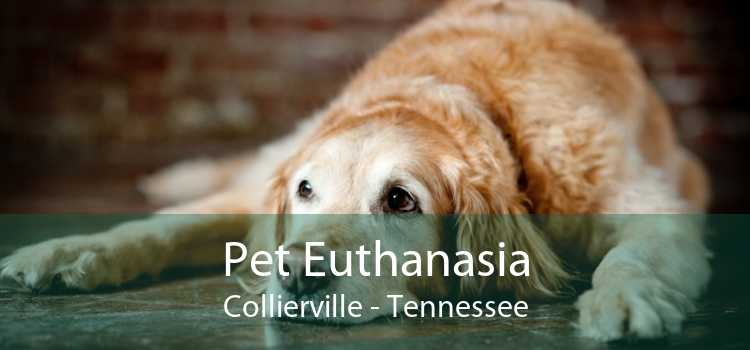 Pet Euthanasia Collierville - Tennessee