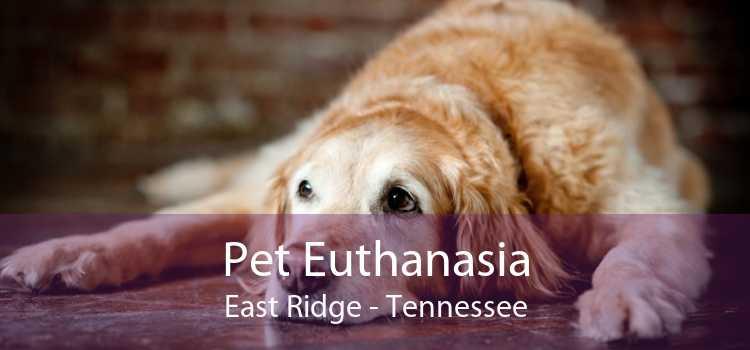 Pet Euthanasia East Ridge - Tennessee