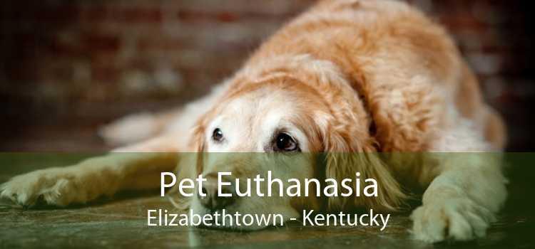Pet Euthanasia Elizabethtown - Kentucky