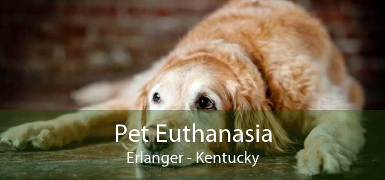 Pet Euthanasia Erlanger - Kentucky