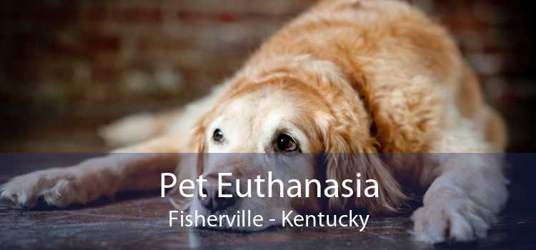 Pet Euthanasia Fisherville - Kentucky