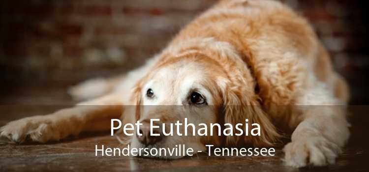Pet Euthanasia Hendersonville - Tennessee