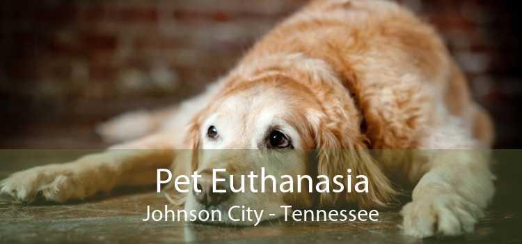 Pet Euthanasia Johnson City - Tennessee