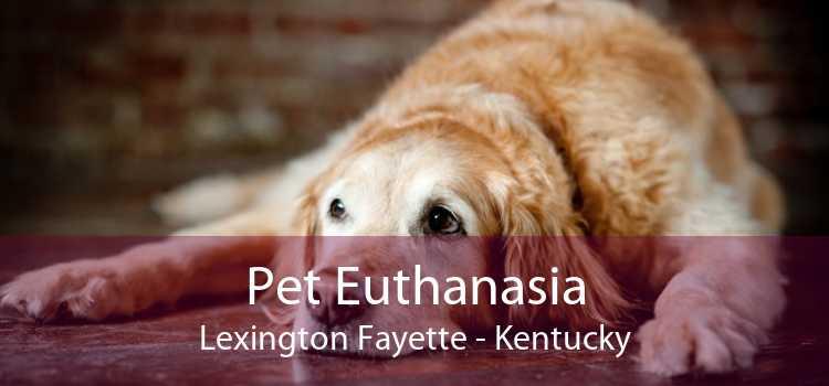 Pet Euthanasia Lexington Fayette - Kentucky