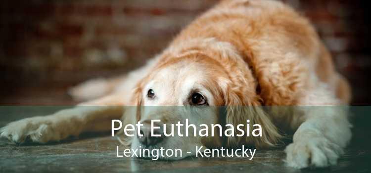 Pet Euthanasia Lexington - Kentucky