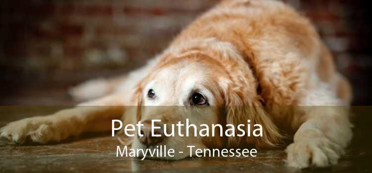 Pet Euthanasia Maryville - Tennessee