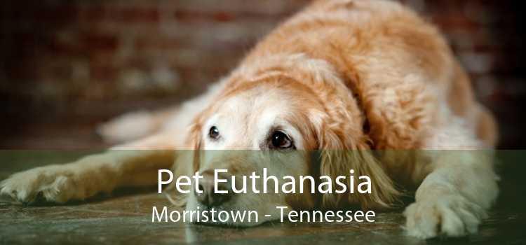 Pet Euthanasia Morristown - Tennessee