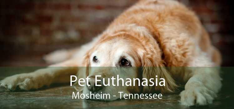 Pet Euthanasia Mosheim - Tennessee
