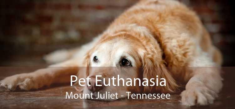 Pet Euthanasia Mount Juliet - Tennessee