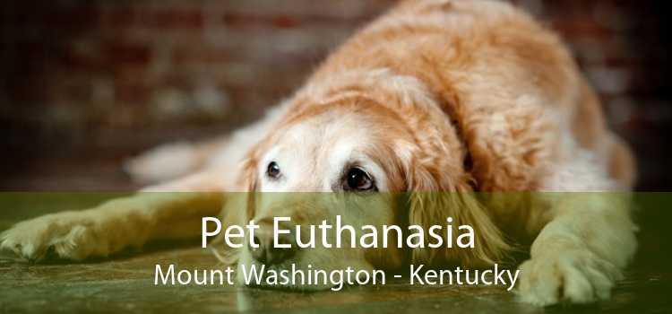Pet Euthanasia Mount Washington - Kentucky