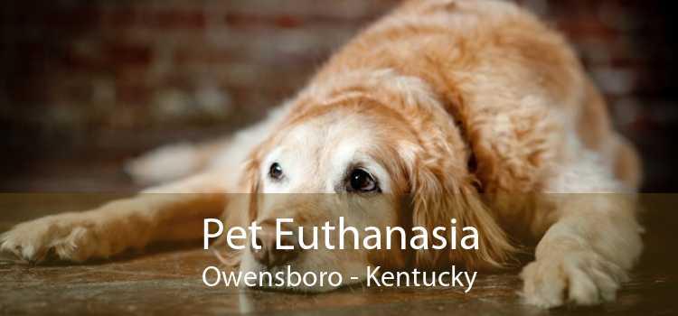 Pet Euthanasia Owensboro - Kentucky