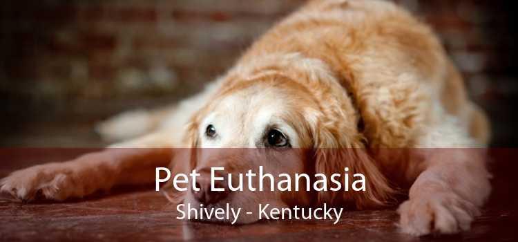 Pet Euthanasia Shively - Kentucky
