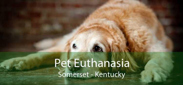 Pet Euthanasia Somerset - Kentucky
