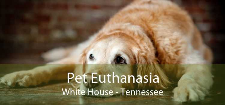 Pet Euthanasia White House - Tennessee