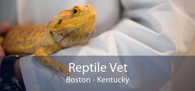 Reptile Vet Boston - Kentucky