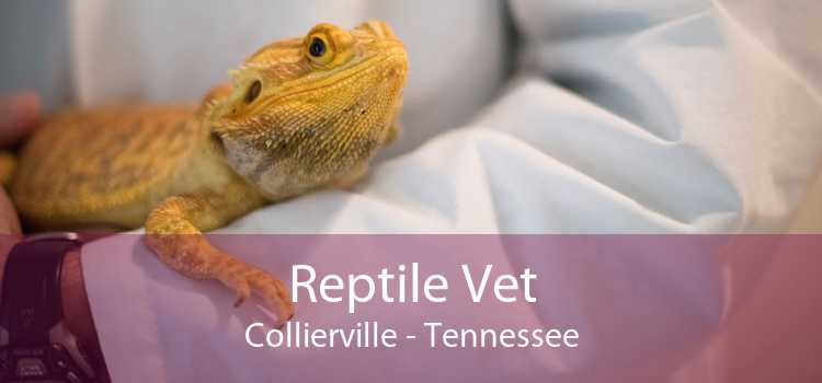 Reptile Vet Collierville - Tennessee